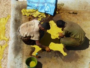 Gelbes Leder am Trocknen