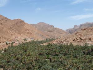 K1024_Palmen und Berge