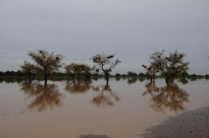 K800_Balzan Bäume im Wasser