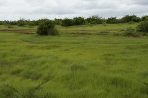 K800_Grün vor Bamako