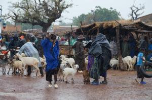K800_Schafhändler im Regen