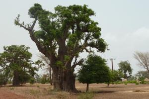 K1024_Baobab Süden