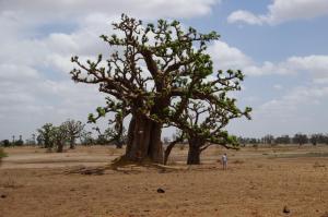 K1024_Doris und grosser Baobab