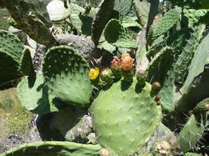 K1024_Kaktus