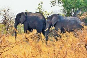 K1024_2 Elefanten