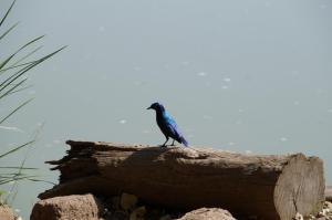 K1024_Blauer Vogel auf Holz