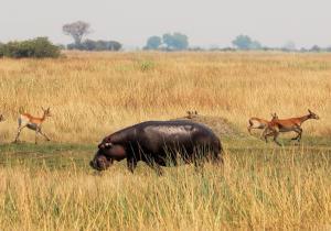 K1024_Hippo am Rennen2 (2)