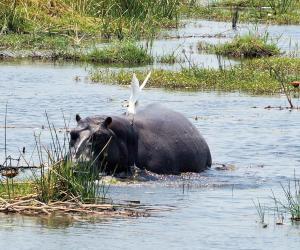 K1024_Hippo und Vogel2
