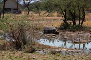 K1024_Hippo Erindi