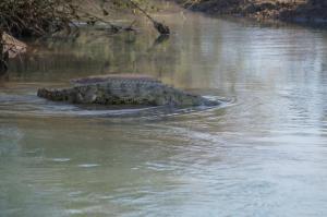 K1024_Krokodil